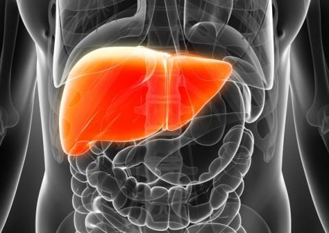La Importancia del Hígado en la Medicina Tradicional China